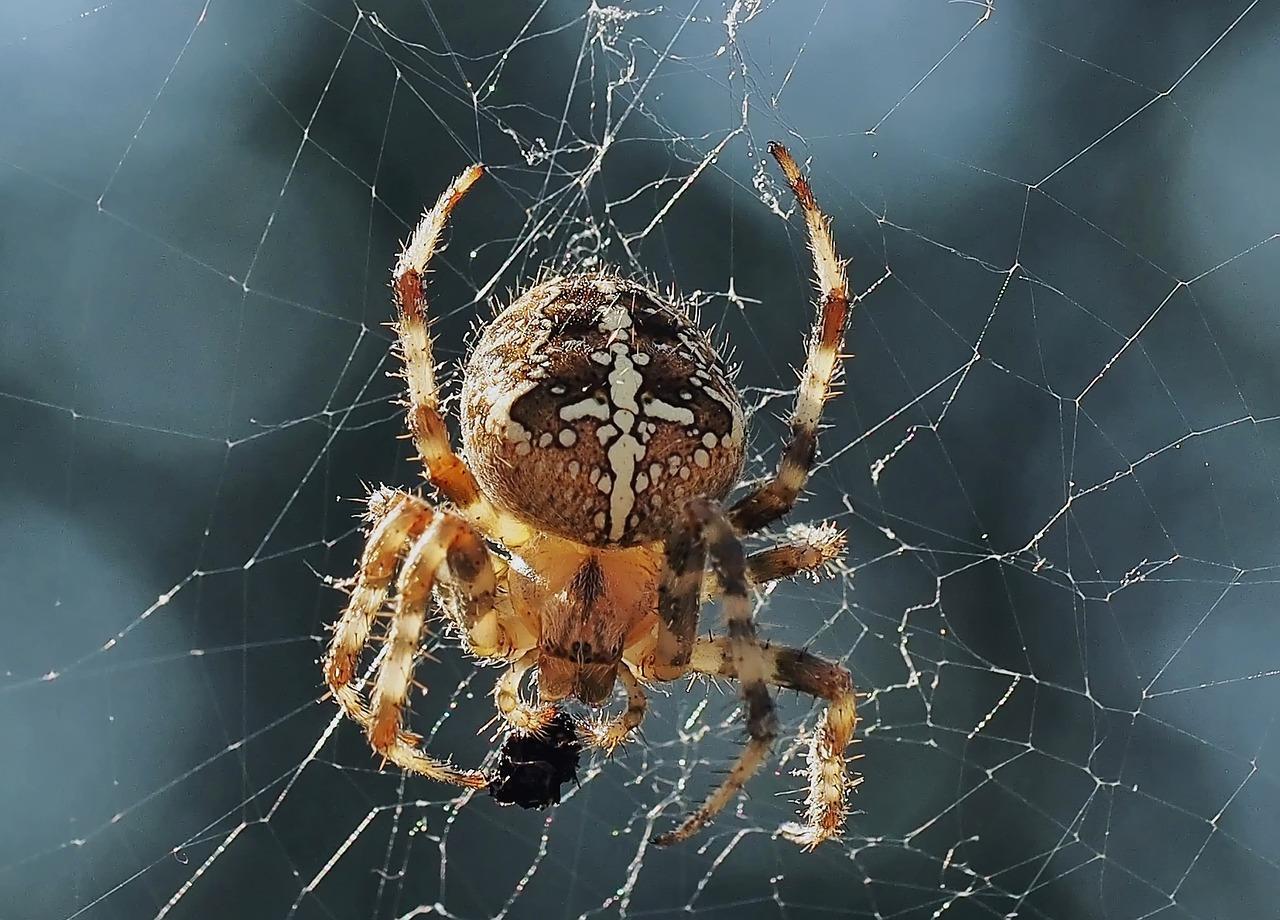 Опасен ли для человека паук крестовик
