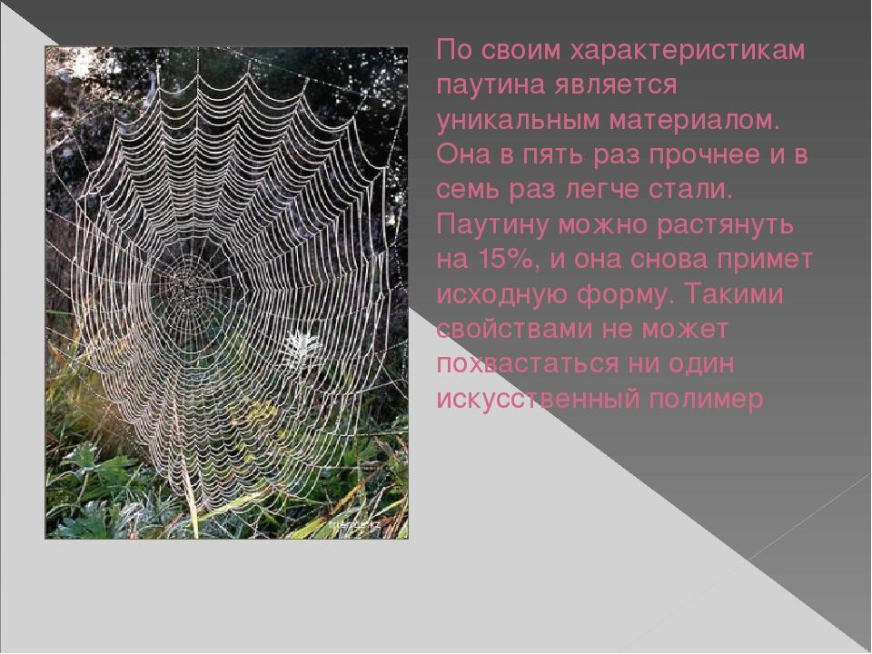 Как паук плетет паутину: состав паутины, функции