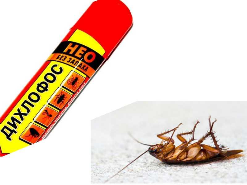 Как дихлофосом травить тараканов
