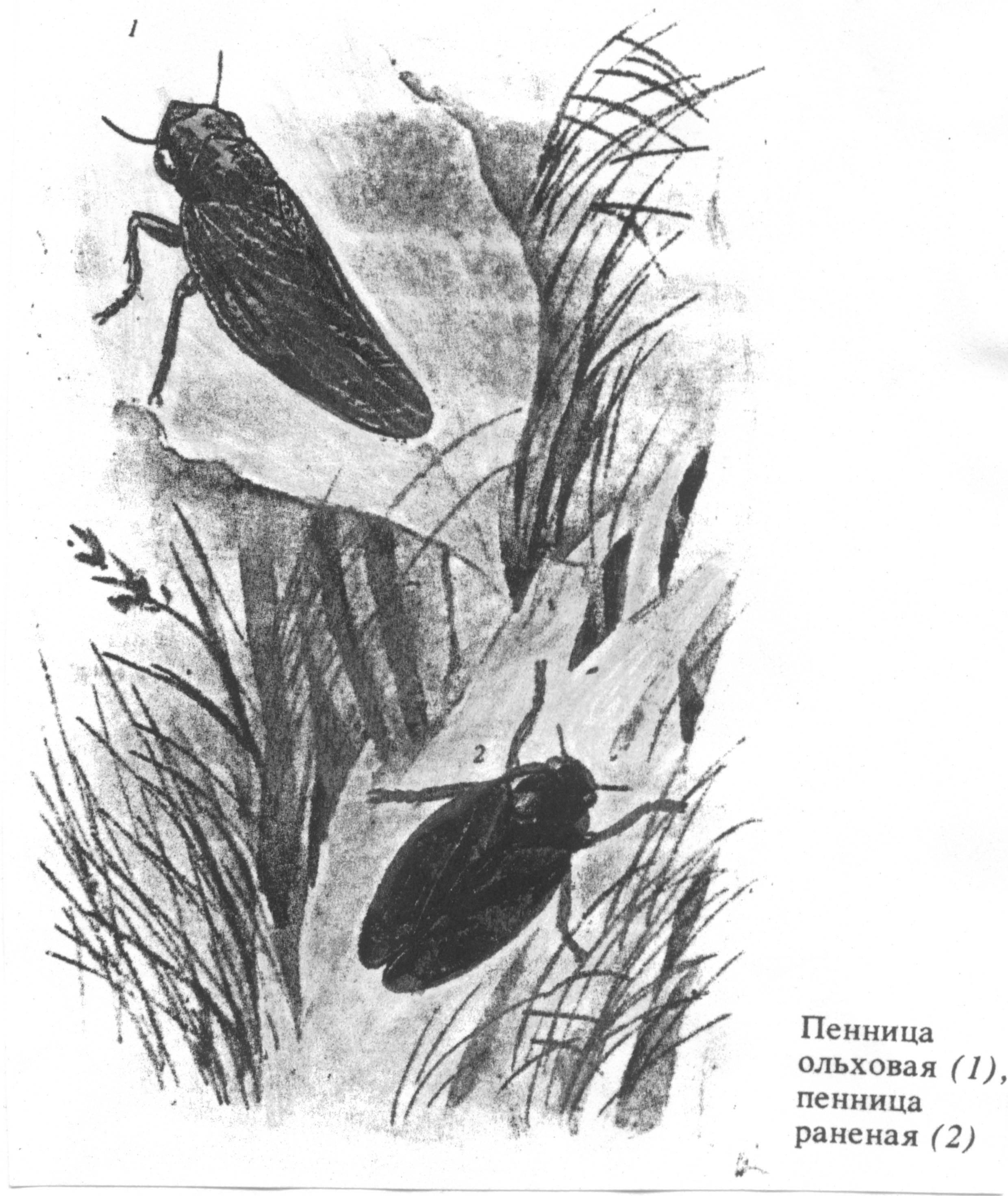 Необычные гнезда птиц   интересное о птицах   ptichka.net - домашние питомцы