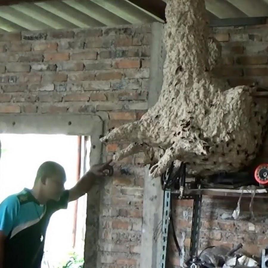 Как уничтожить гнездо шершней — рассказываем вопрос