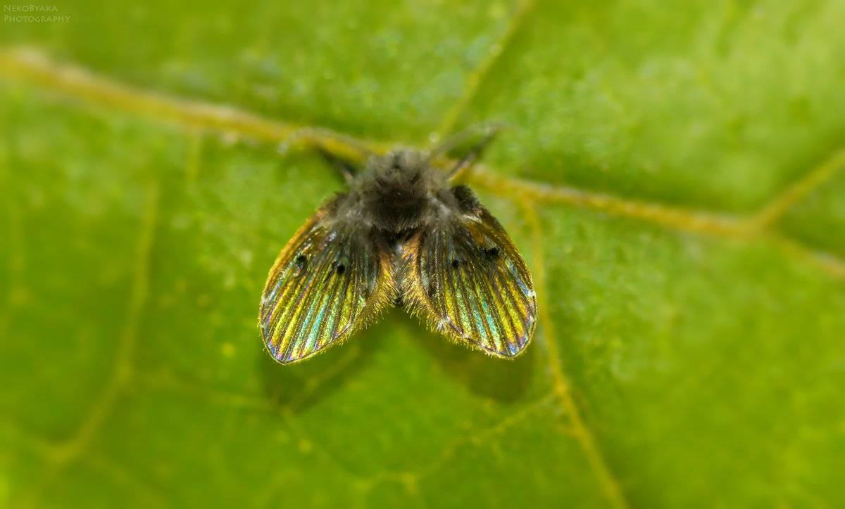 Как избавиться от бабочницы. как избавиться от бабочницы и её личинок