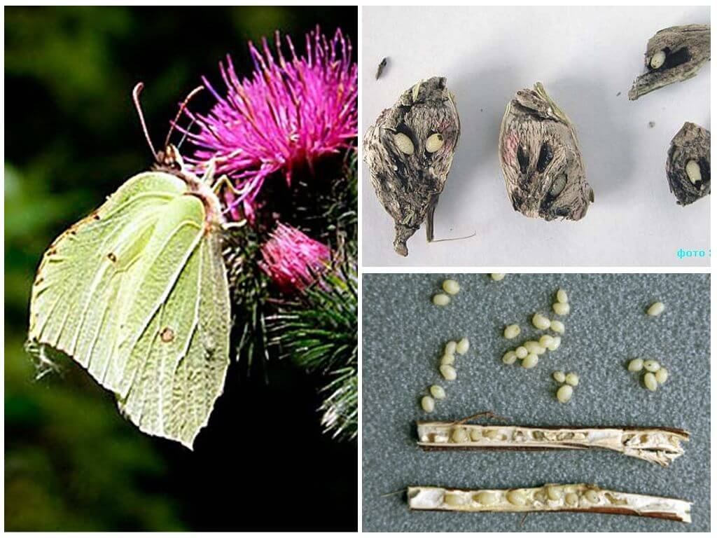 Личинки моли - как выглядят, особенности питания