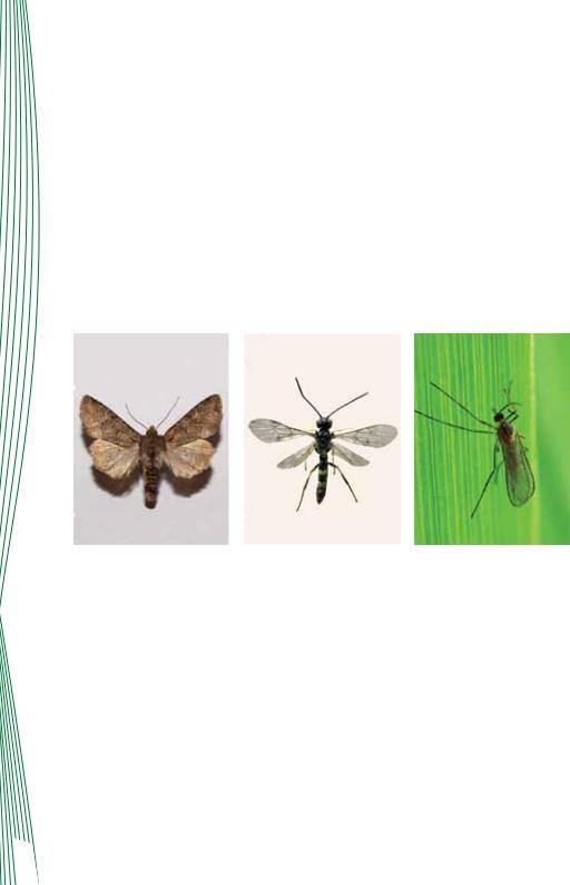 Особенности жука бронзовки: общая характеристика, внешний вид зелёного жука и личинки, вред и методы борьбы
