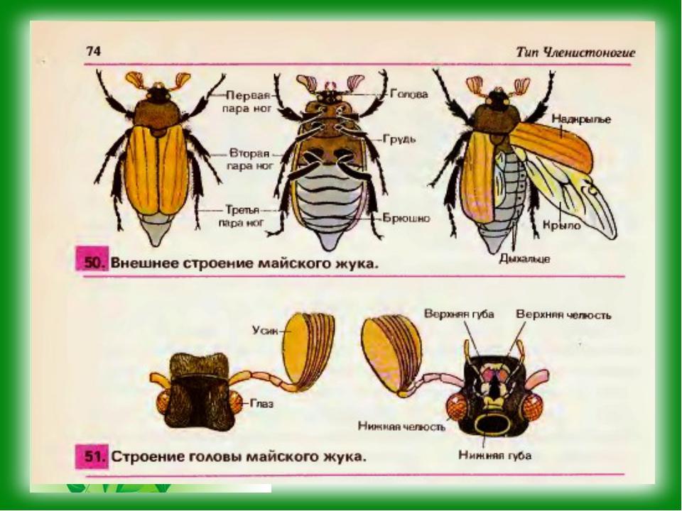 Класс насекомые. внешнее и внутреннее строение, размножение