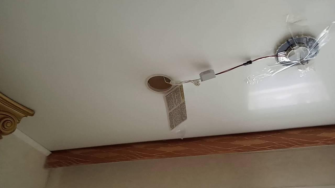 Могут ли мыши прогрызать натяжные потолки?