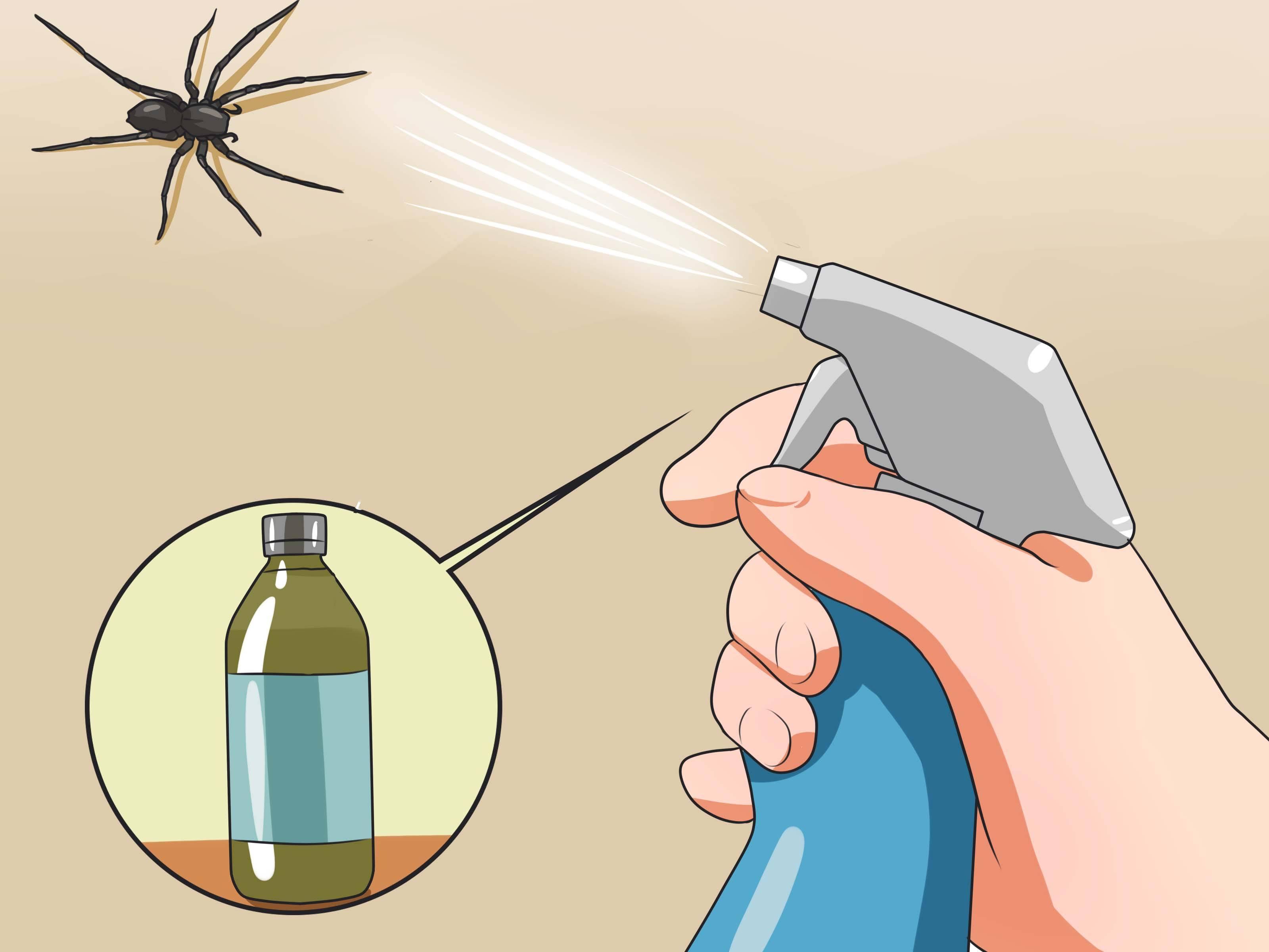 Как избавиться от пауков в частном доме и квартире навсегда: лучшие средства и отравы