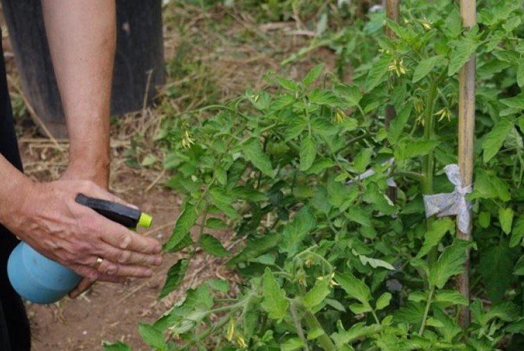 Как избавиться от тли: какие меры борьбы помогут, если заражены укроп, нимфеи в огороде, какими методами и средствами навсегда вывести вредителя с садового участка? selo.guru — интернет портал о сельском хозяйстве