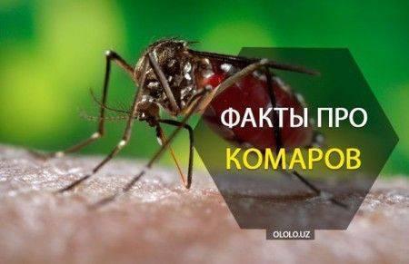 Факты про комаров. интересные факты о комарах, или за что уважать кровососа