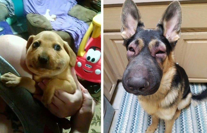 Что делать, если собаку укусила пчела