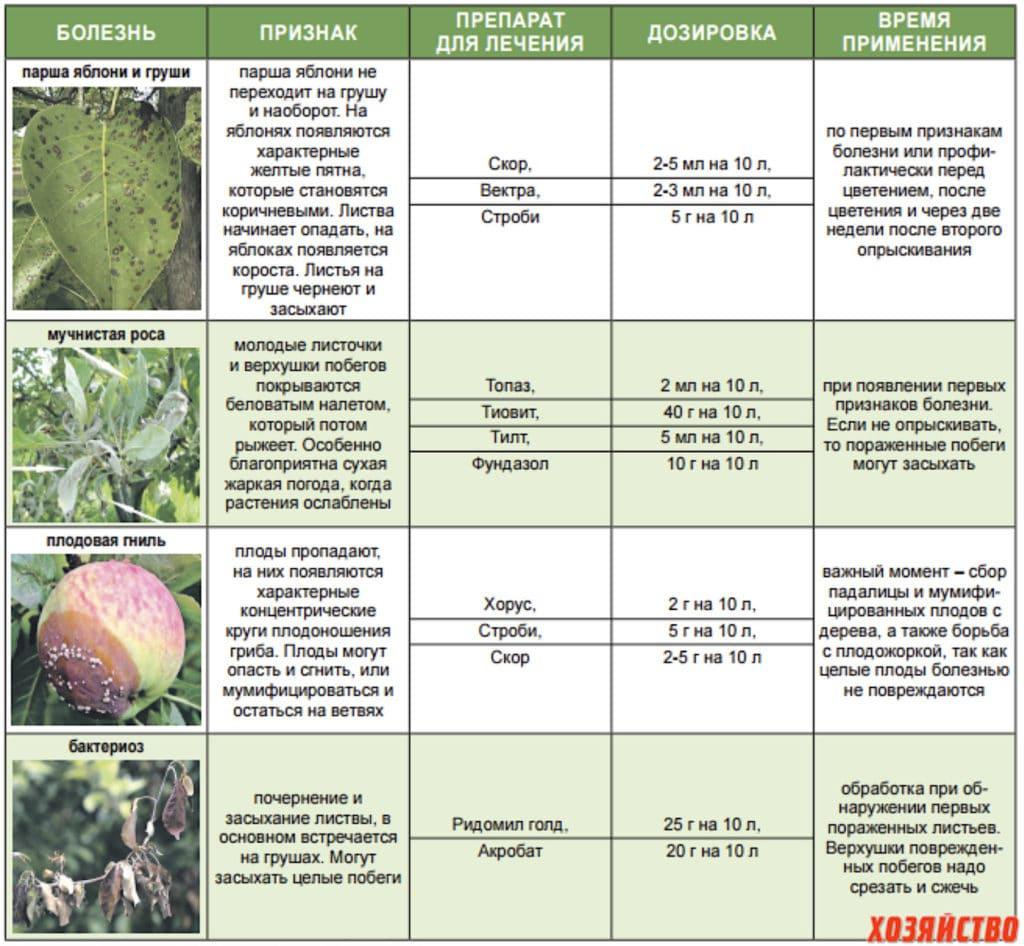 Тля на яблоне: как бороться с вредителем народными, химическими и биологическими методами