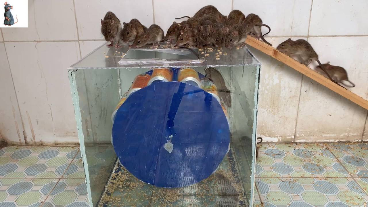 Ловушки для крыс и мышей - обзор эффективных капканов
