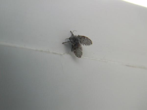 Откуда берутся мухи в квартире или доме, как избавиться