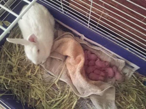 Рекомендации по уходу и содержанию маленьких крысят
