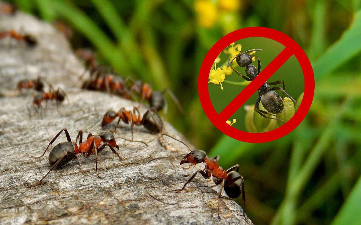 Инсектицидные средства от муравьев  — критерии выбора и сравнительная оценка 22-х препаратов