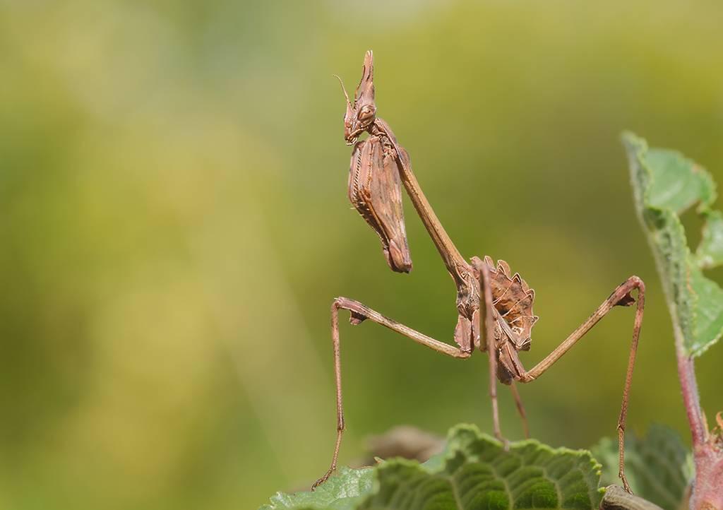 Самые крупные насекомые крыма - фото, видео, описание