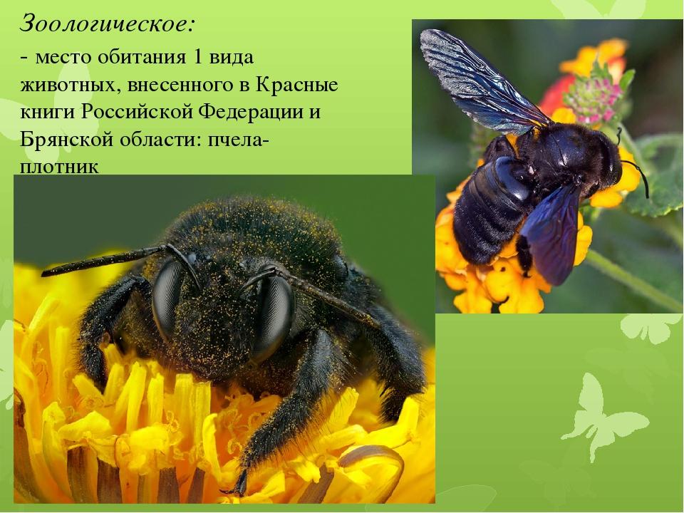 Как дрель работает. какие гнёзда строит пчела-плотник