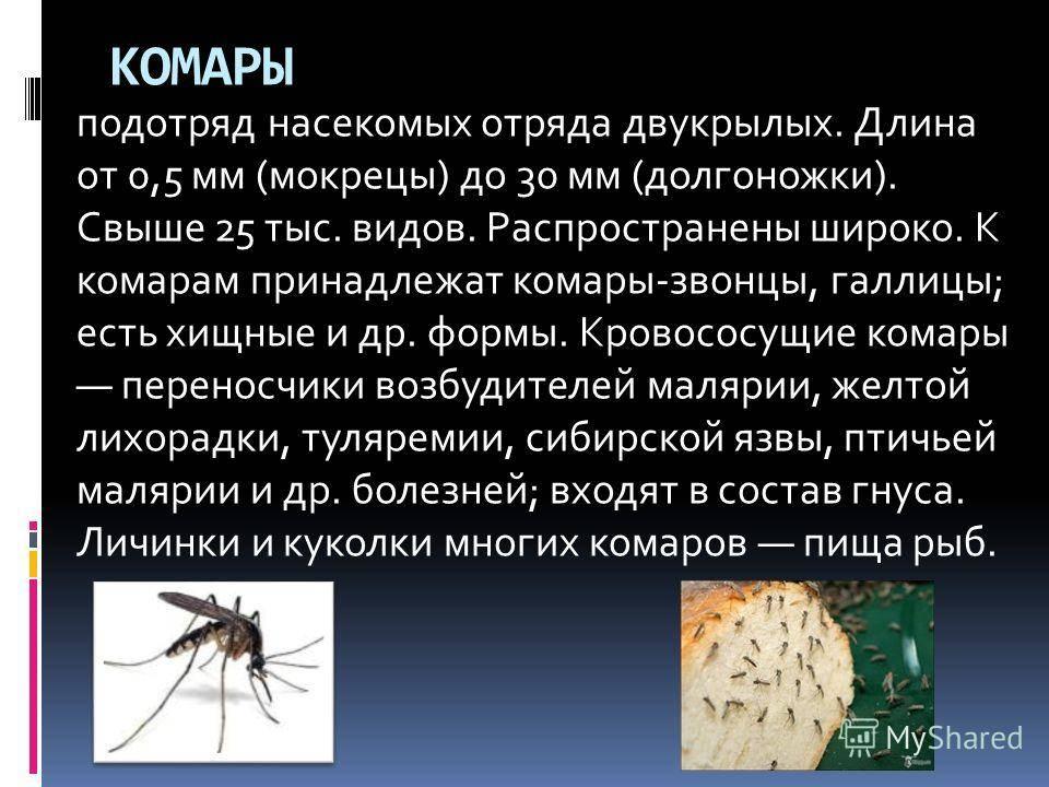 Комары в квартире откудаты, если окна закры