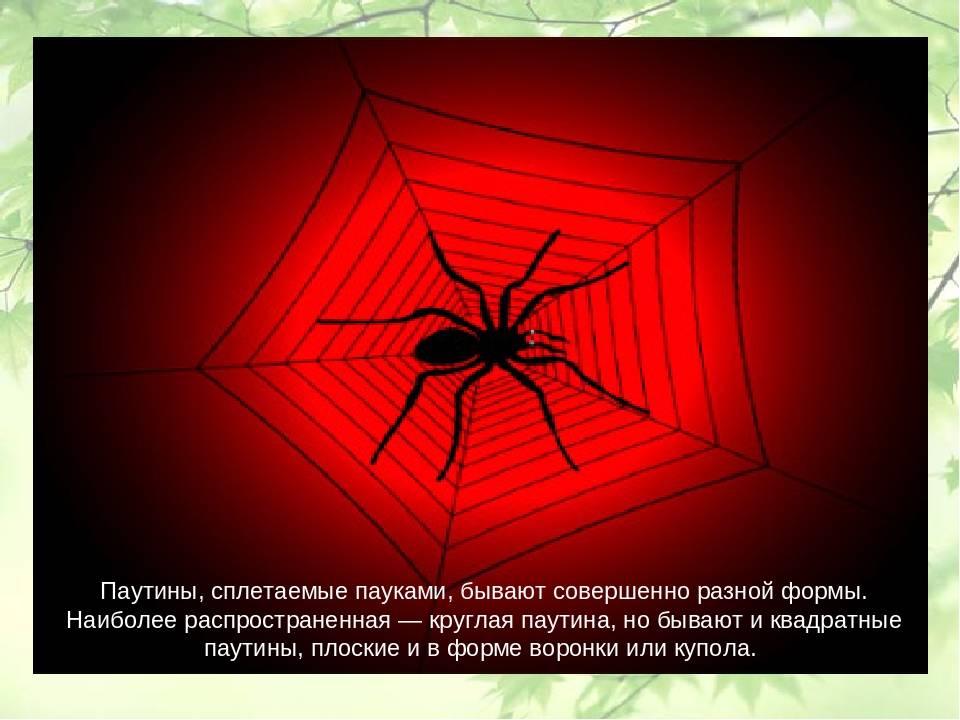 Как и почему паук плетет свою паутину