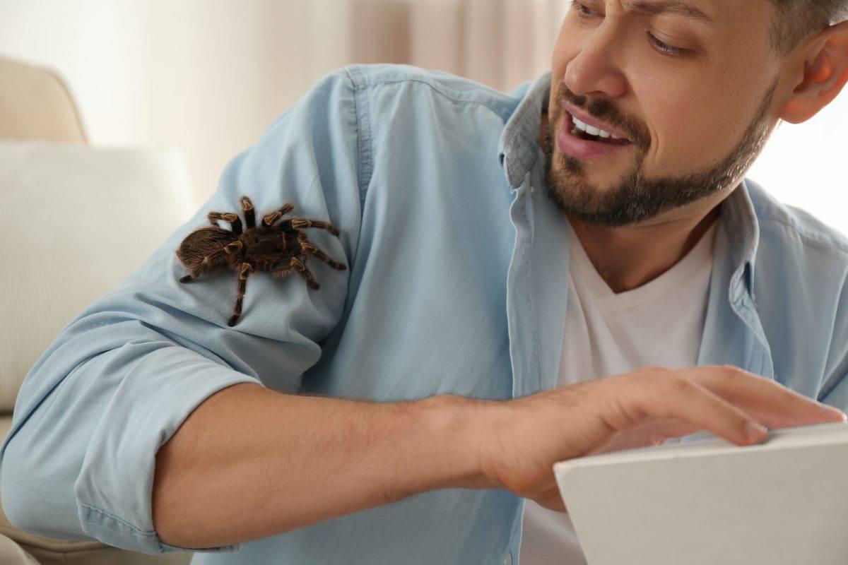 Боязнь пауков: как называется фобия и как избавиться от этого страха