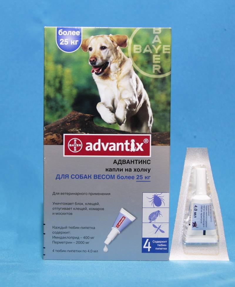 Адвантикс для собак: инструкция по применению | цена, отзывы