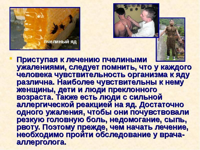 Пчелиный яд, действие на организм. лечение пчелиным ядом. польза и вред