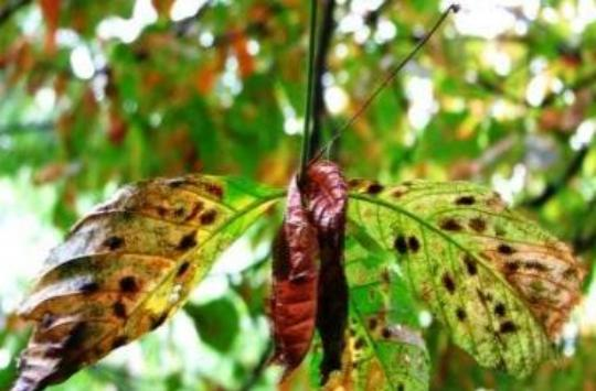 12 народных средств от моли: как навсегда избавиться от насекомых в квартире и огороде