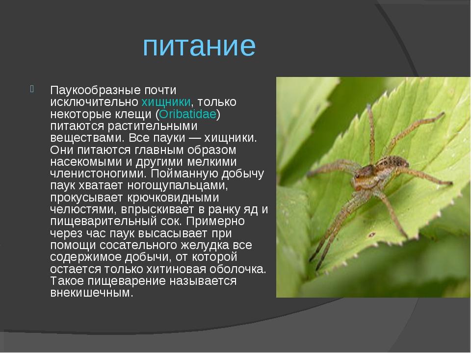 Виды клещей – фото, внешний вид и особенности питания