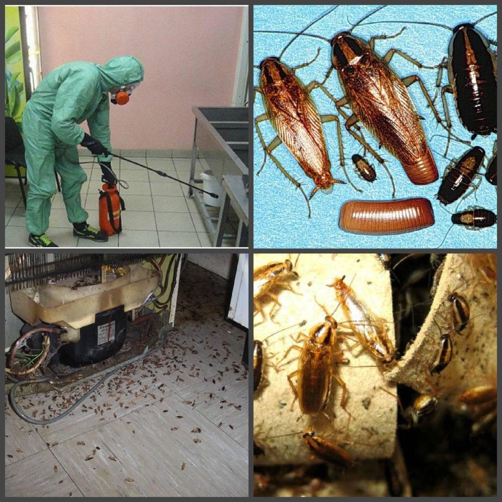 Дезинфекция тараканов в квартире