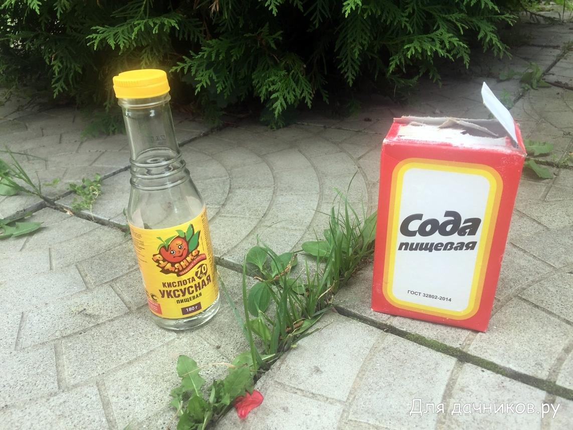 Как избавиться от муравьев в огороде: народные методы