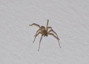 Как избавиться от пауков в доме и квартире: средства и методы борьбы