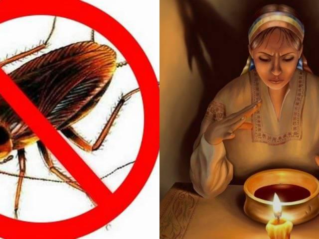 От тараканов заговор: как навсегда избавиться