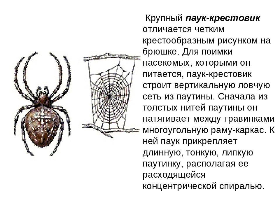 Крестовик обыкновенный | мир животных и растений