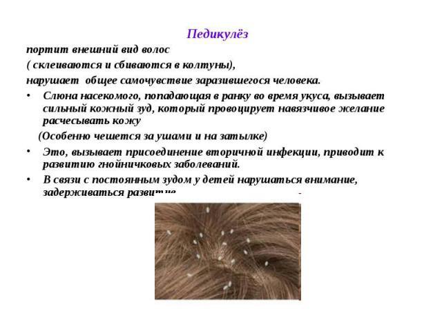 Педикулёз тела - симптомы болезни, профилактика и лечение педикулёза тела, причины заболевания и его диагностика на eurolab