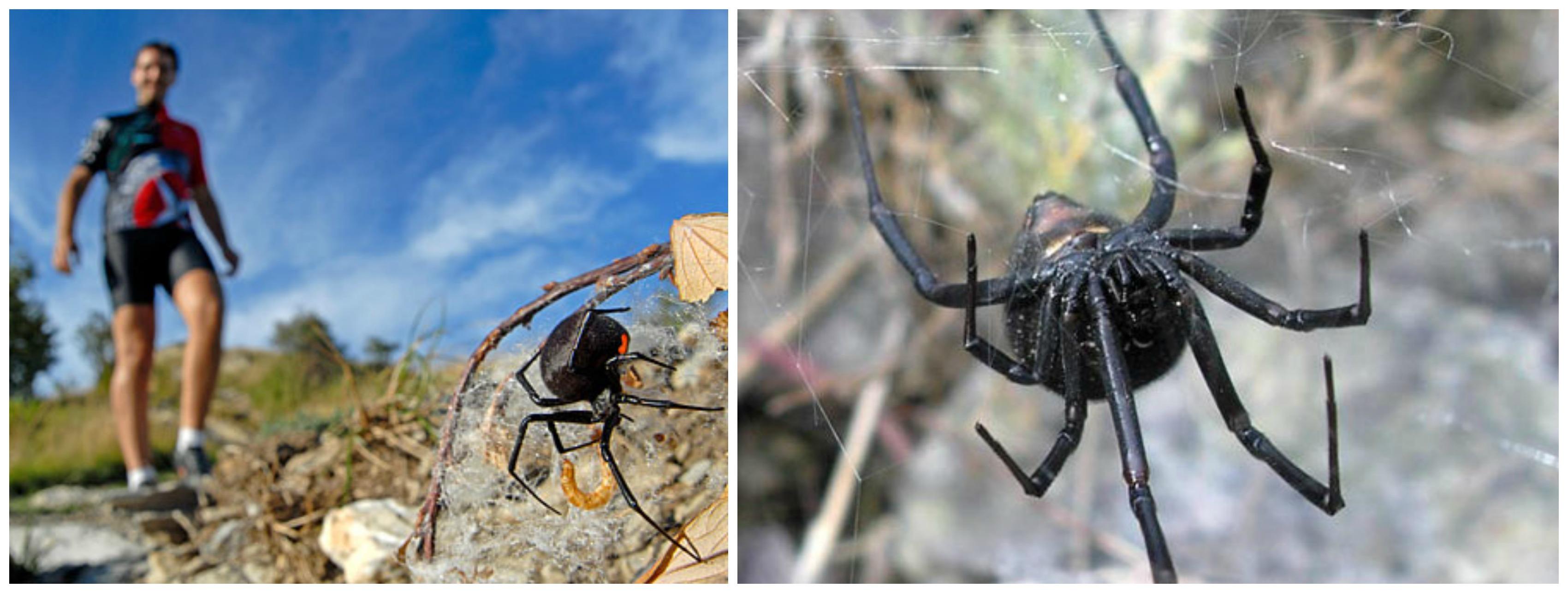 Укусы пауков : симптомы и лечение | компетентно о здоровье на ilive