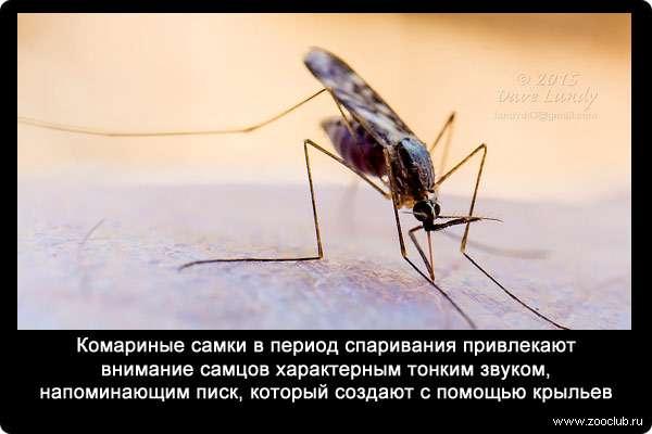 Интересные факты о комарах: сколько весит, когда спят и другие