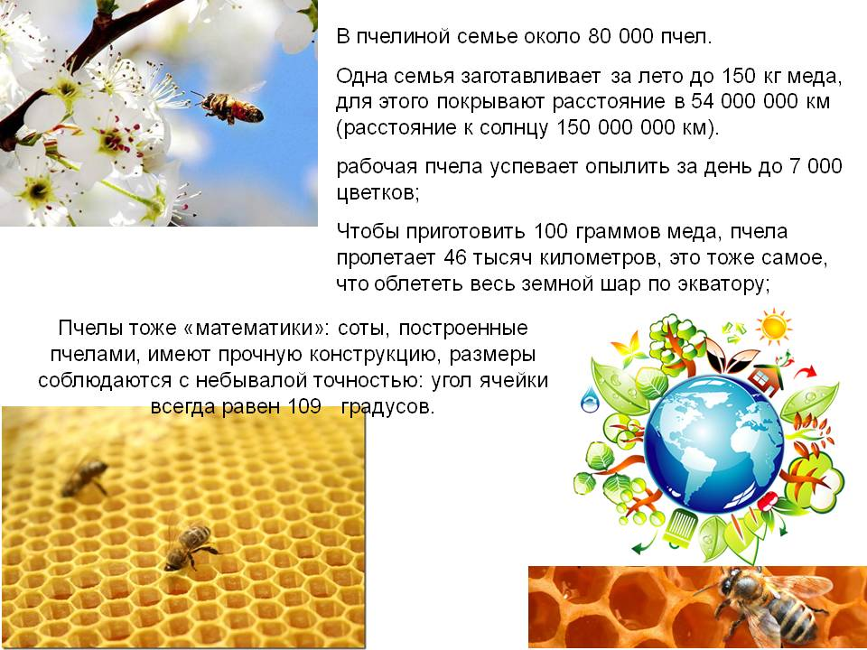 Породы пчел: их описание и различия между собой