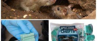 Как навсегда избавиться от мышей на даче