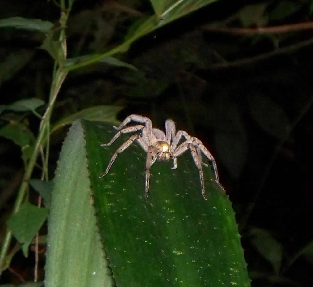 15 самых опасных пауков в мире - zefirka
