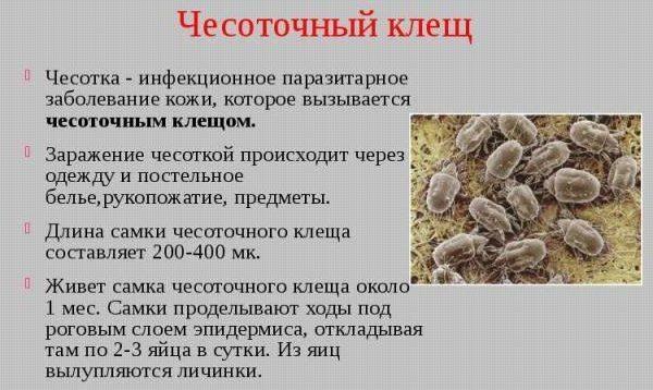 Пылевой клещ: как избавиться в домашних условиях, при какой температуре насекомые гибнут и как их уничтожить при помощи химических, народных и других средств?