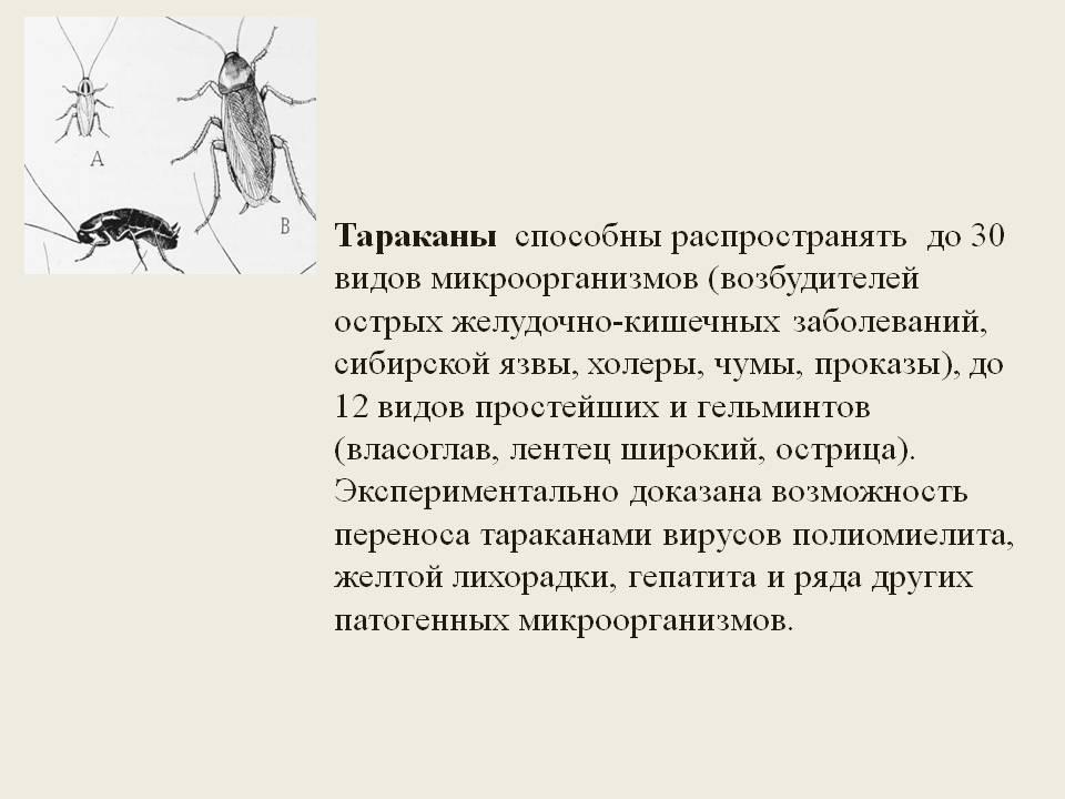 Чем опасны для человека живущие в квартирах тараканы?