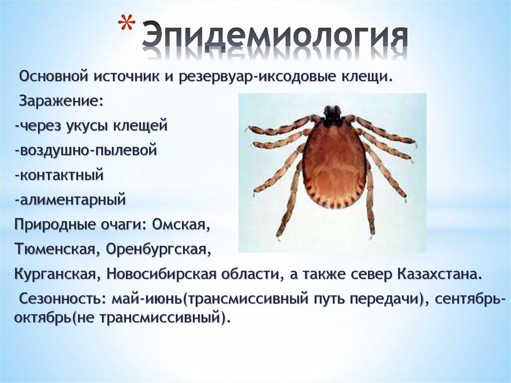 Чем опасны клещи для человека и домашних животных