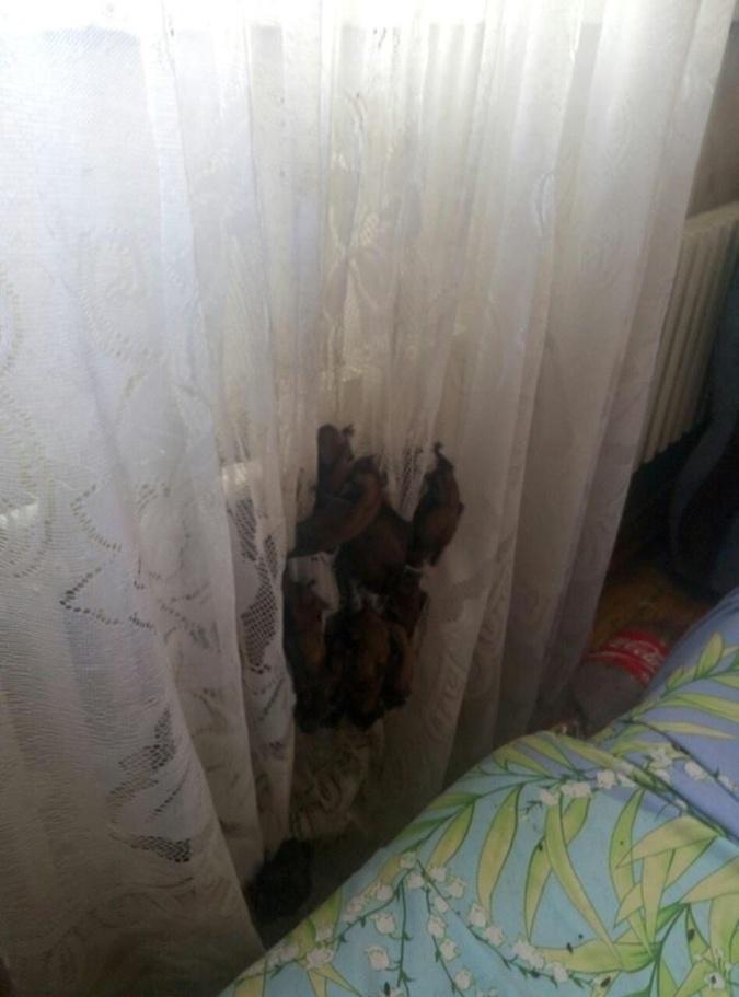 Что делать, если летучая мышь залетела в квартиру: советы экспертов
