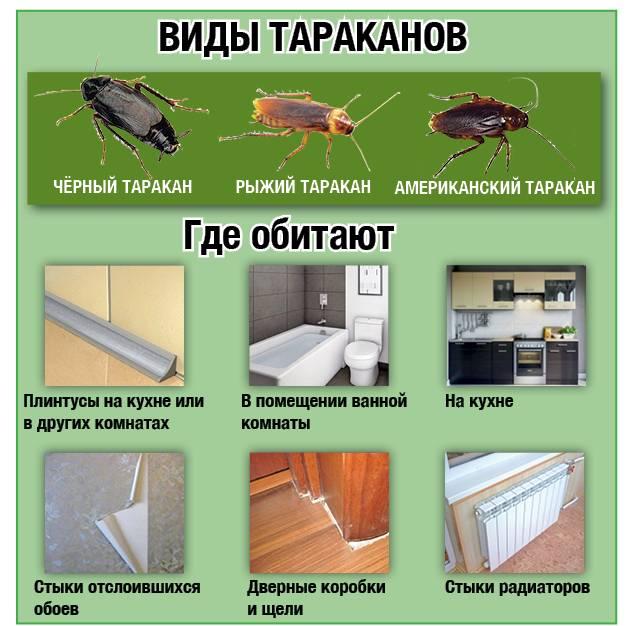 В частном доме появились тараканы