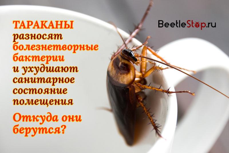 Почему в квартире появляются тараканы: причины появления, как избавиться