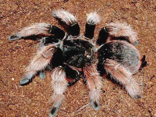 Сколько живут пауки в квартире и на природе, отчего зависит продалжительность их жизни?