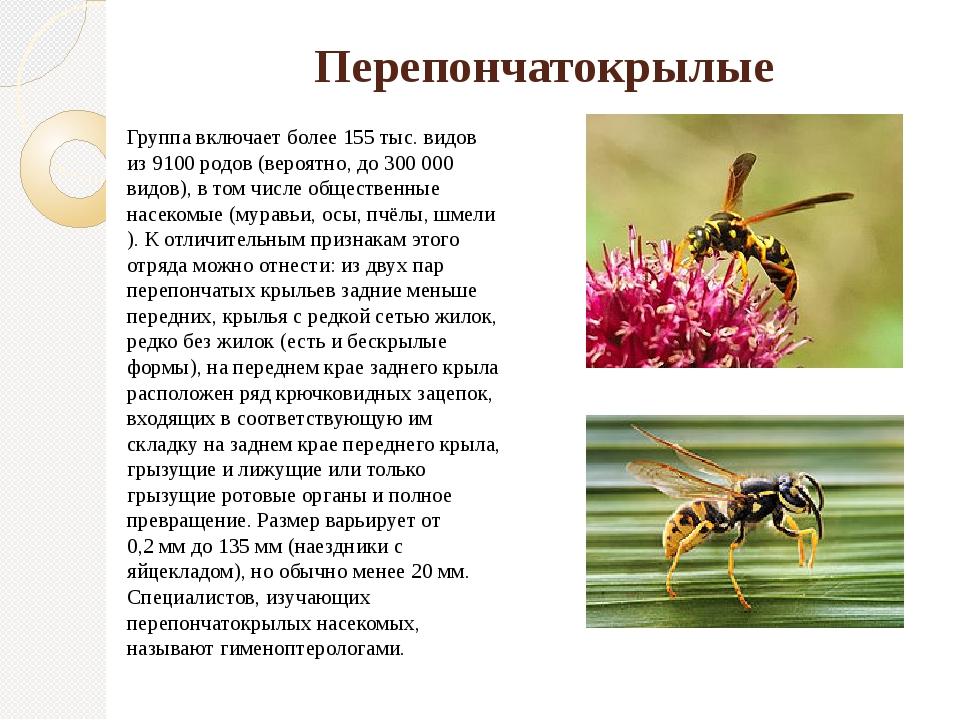 Что делают осы и зачем они нужны в природе, какую пользу приносят, вред от ос, опыляют ли растения