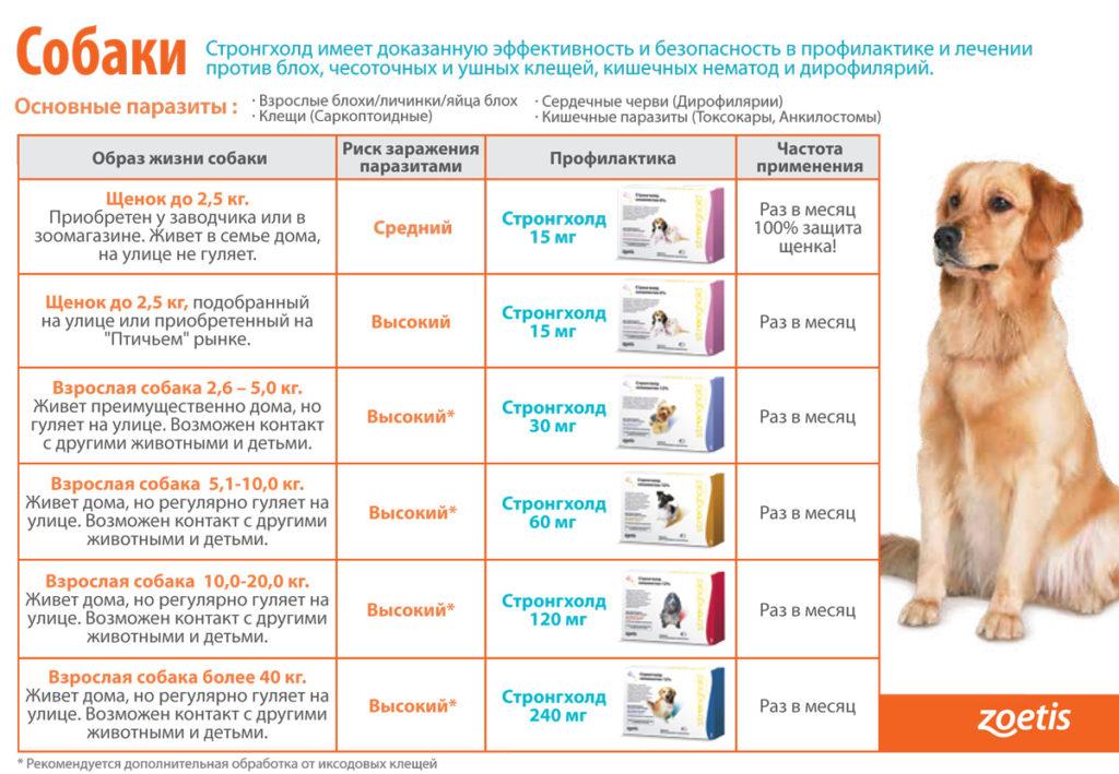 Стронгхолд для кошек - инструкция и показания к применению капель, цена