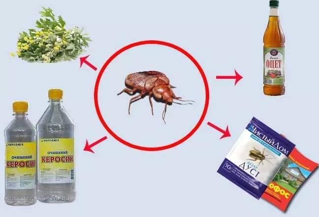 14 самых эффективных средств от клопов в квартире: растворы, гели, аэрозоли, спреи, дусты