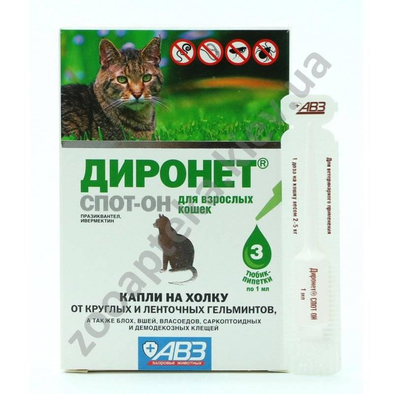 Профилактика глистов у кошек: для чего нужна и как часто проводить